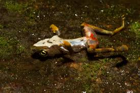 Enhancing amphibian mitigation outcomes - NatureMetrics Case Study - Wildlife Diseases