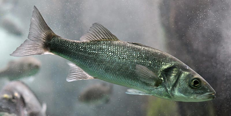 Fish communities of the River Frome